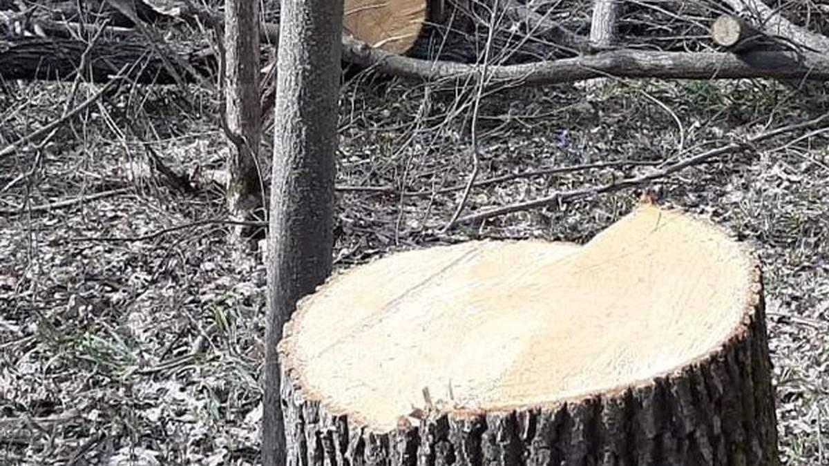 На Харківщині судитимуть поліцейських, які кришували лісорубів