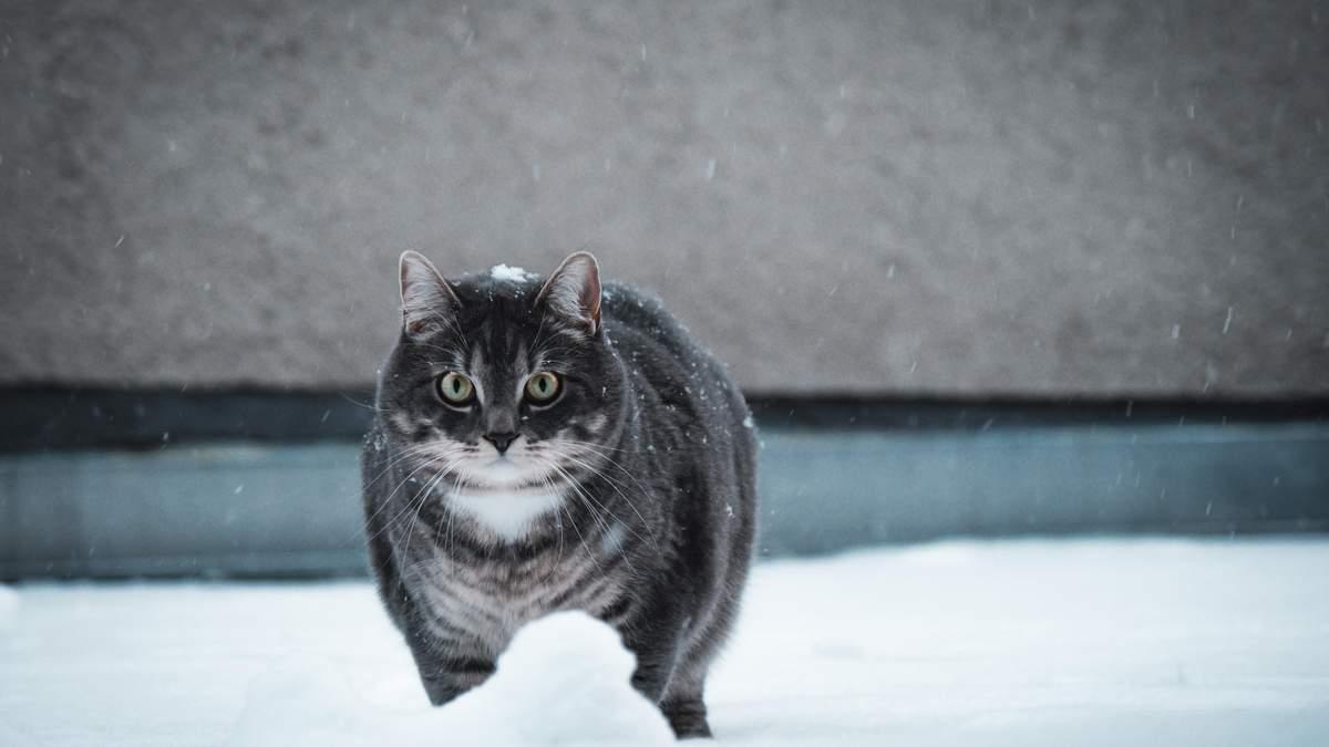 Зима возвращается: 22 – 25 марта 2021 Украину накроют снегопады