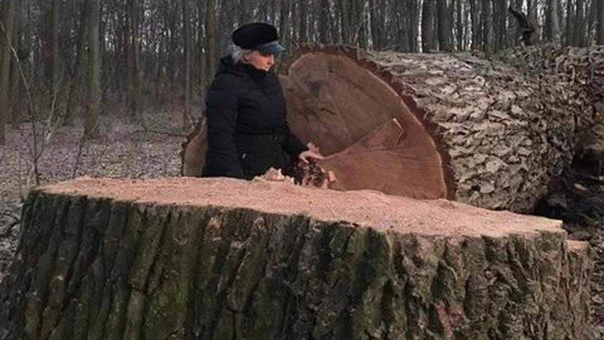 У Голосіївському парку невідомі зрізали 17 живих вікових дубів