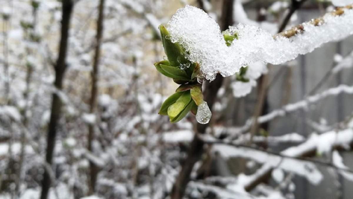 В Украине возвращается снег: где и когда ждать осадки