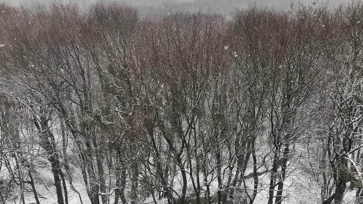 Снег выпал во Львове 6 апреля 2021: фото, видео