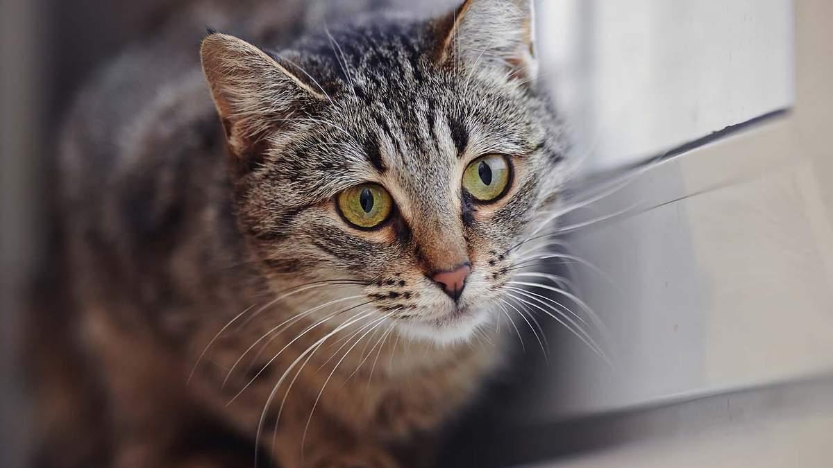 Одеситку будуть судити за вбивство кота в Суворовському районі