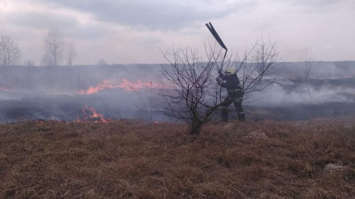 В Украине за сутки обнаружили 60 пожаров сухостоя - МВД