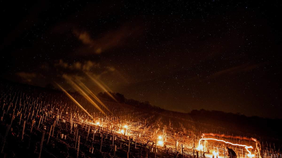 Во Франции очагами согревают виноградники от весенних заморозков