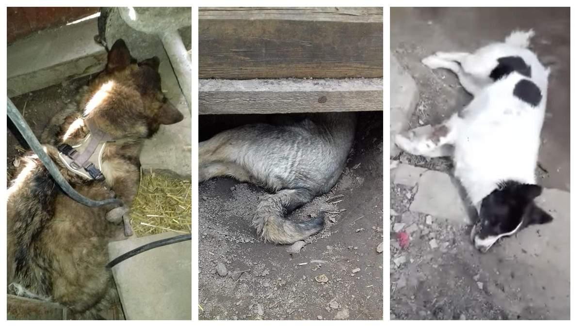 В Жмеринке живодер убил 3 собак: Геращенко пообещал наказать подонка