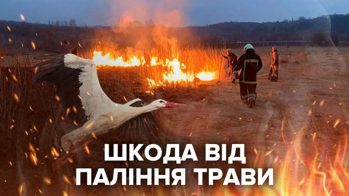 Спалювати суху траву небезпечно та шкідливо
