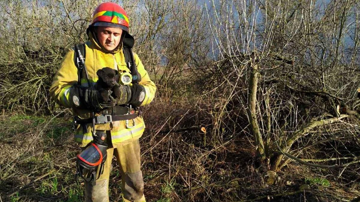 На Днепропетровщине ДСНС вытащили собаку со дна 15-метрового колодца