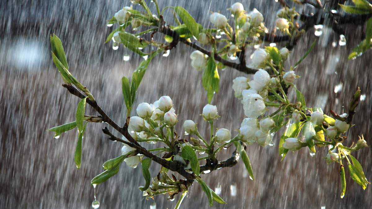 В ближайшие дни Украину накроют дожди и грозы