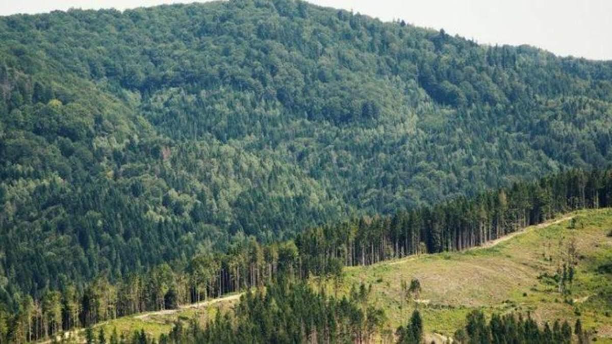 В Украине инвентаризуют леса:  утвердили порядок процедуры