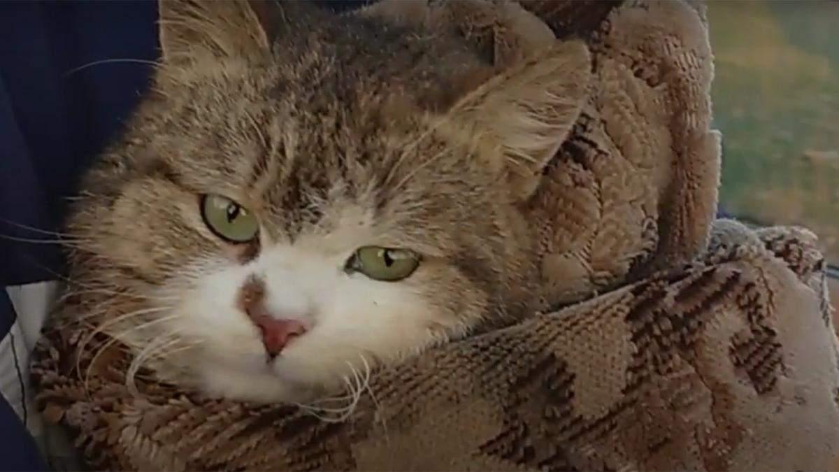 На Харьковщине спасли кота с 18-метрового колодца