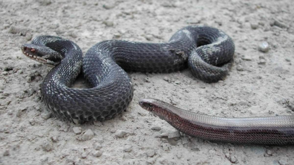 На Львовщине харьковчанина укусила змея: он попал в реанимацию