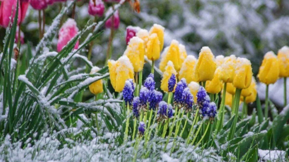У травні Україну можуть охопити заморозки