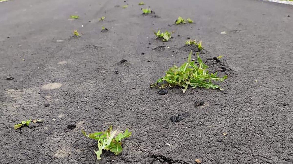 На Днепропетровщине сквозь новенькую дорогу пробились сорняки: фото