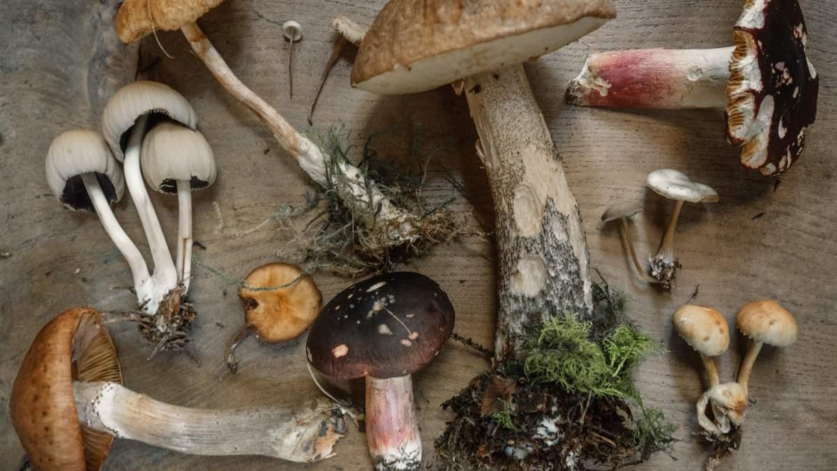 Отравление грибами на Черниговщине: родные погибших в реанимации