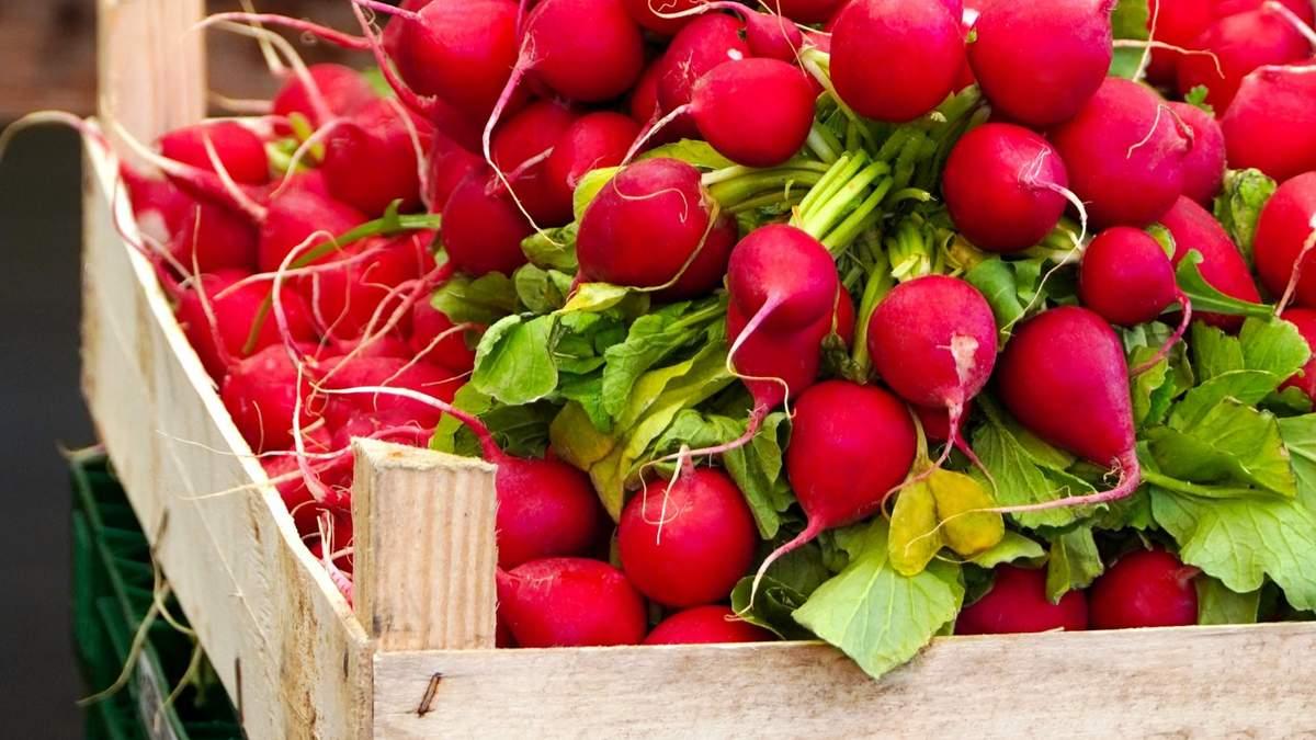 Чем полезен редис и как его правильно выбирать весной