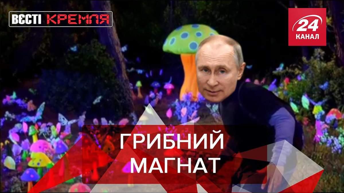 Вести Кремля: В России ужесточили правила сбора грибов