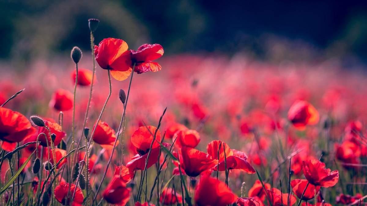 Картинки с Днем памяти и примирения 2021: поздравления, открытки с праздником