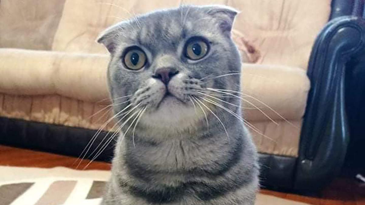 У Дніпрі ром пограбував будинок, побив дитину та викрав кота