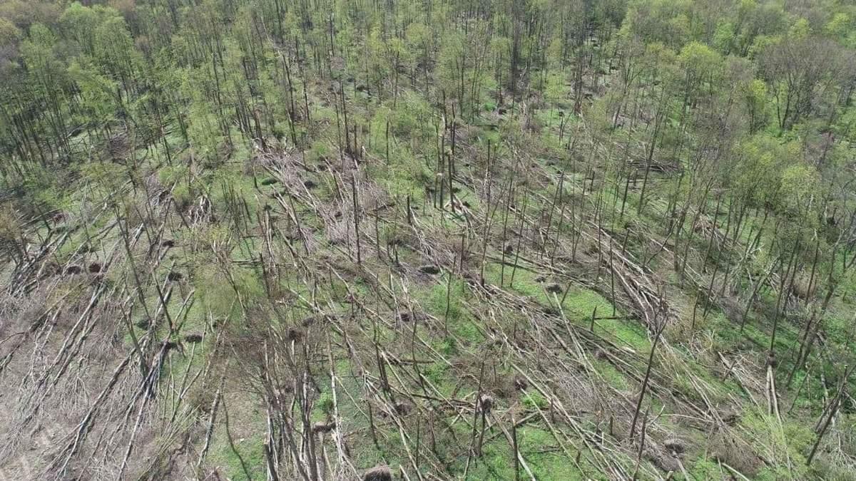 На Житомирщині пронісся потужний смерч: 20 гектарів лісу пошкоджені