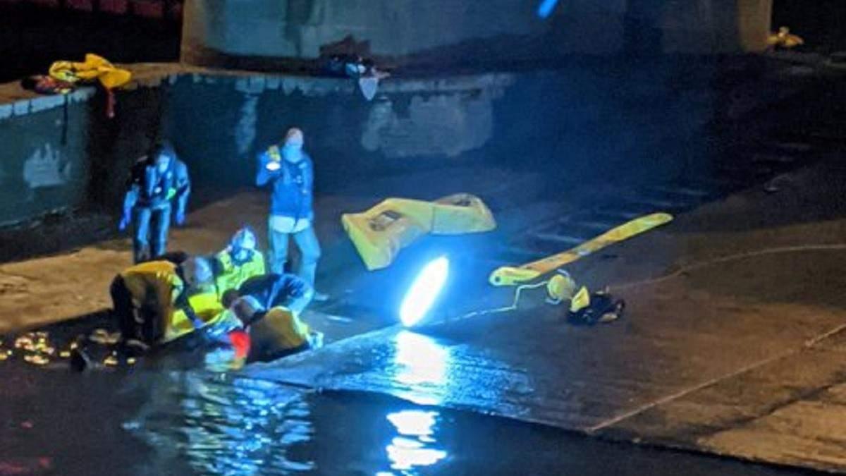 В Лондоне в реке Темза застрял кит: фото, видео