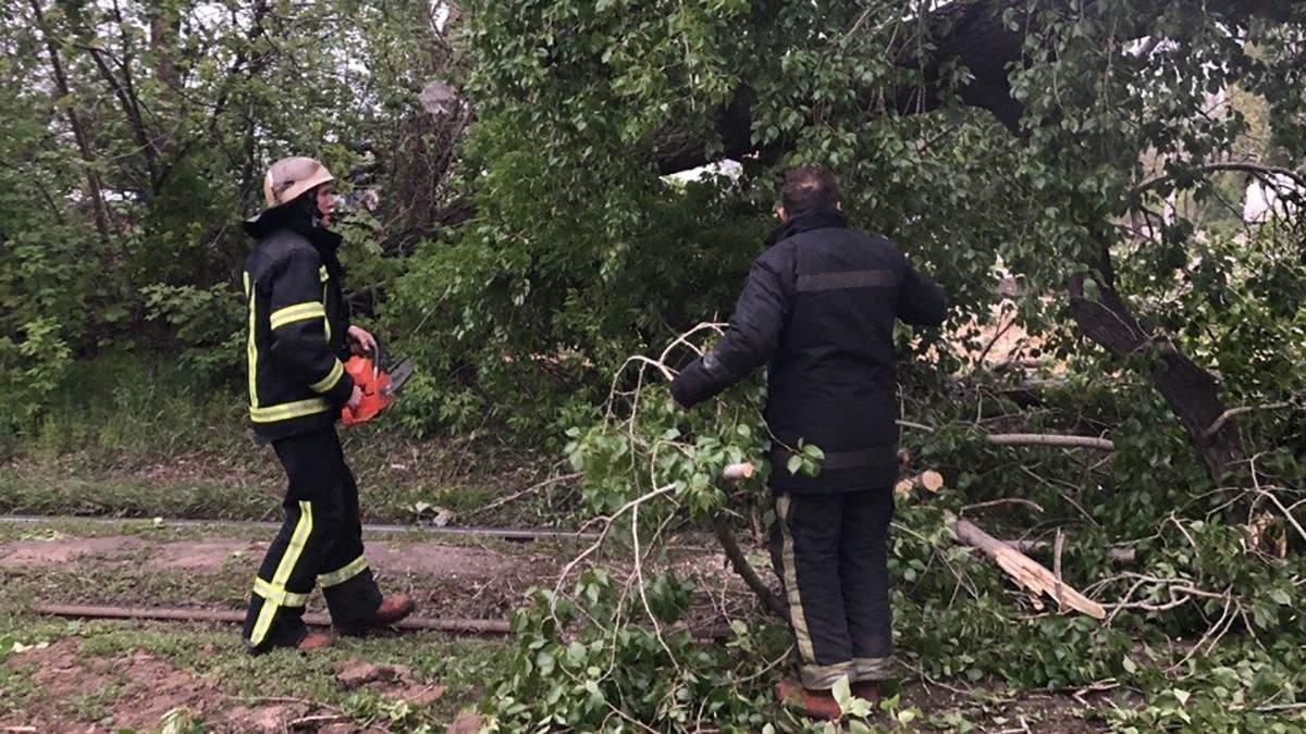 На Харьковщине 10.05.2021 сильный ветер валил деревья: видео
