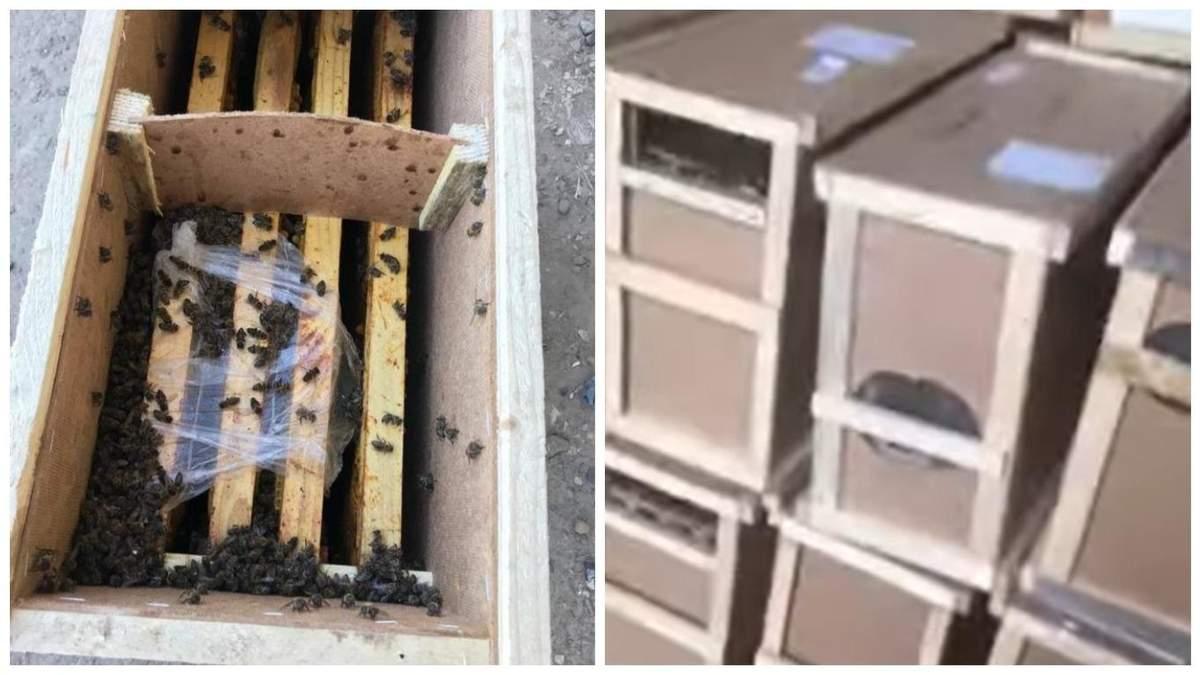 Померлі бджоли з вантажівки Укрпошти на Закарпатті ожили: відео