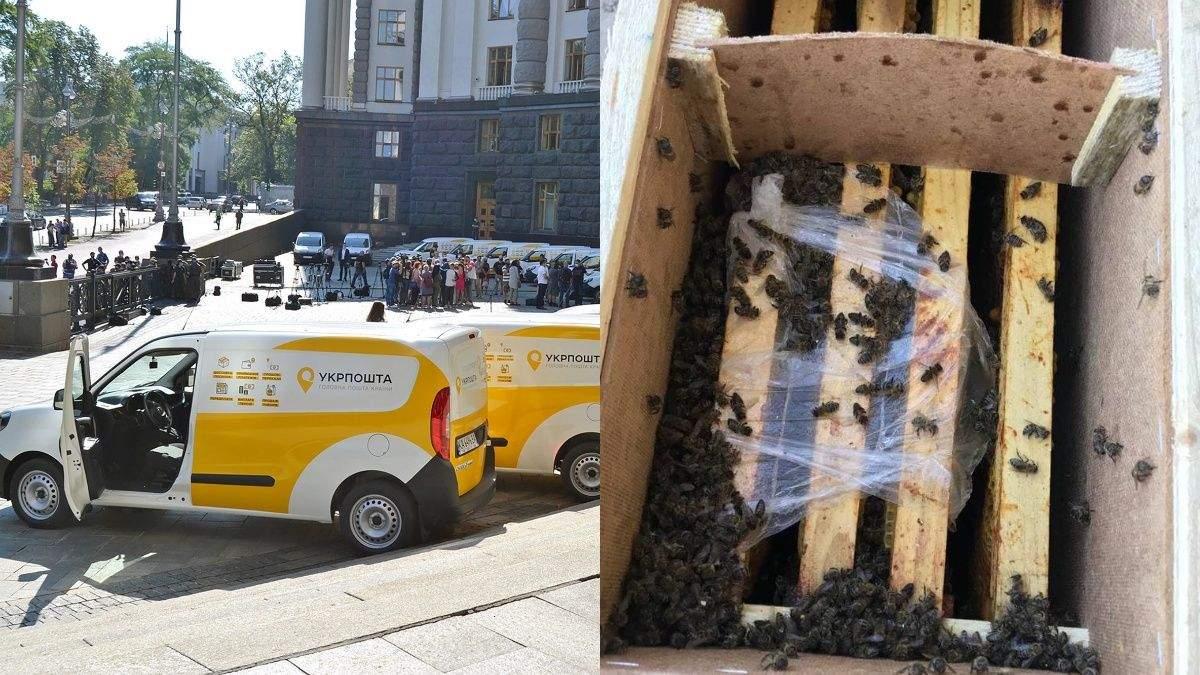 В Укрпошті ожили бджоли, але відправник відмовляється їх забирати