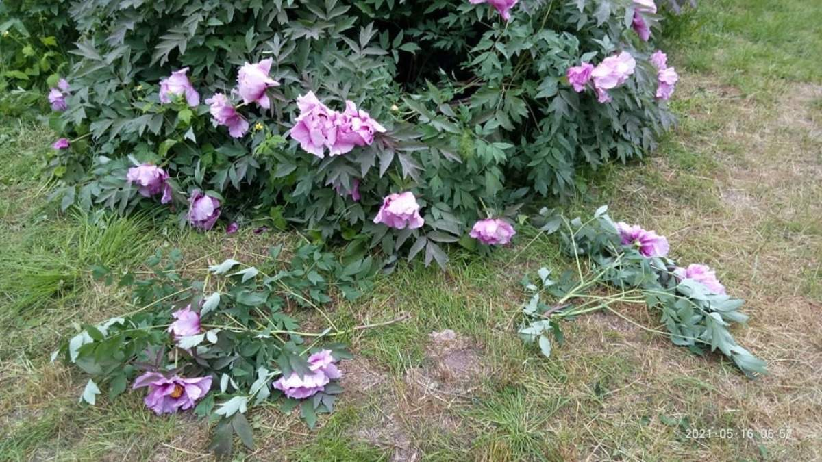В первый день открытия посетители одесского ботсада вытоптали цветы