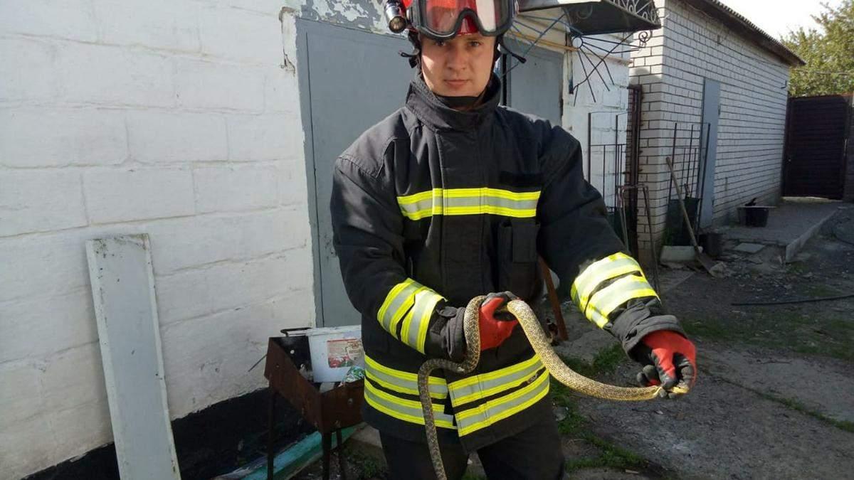 Під Дніпром на подвір'я приватного будинку залізла змія – фото