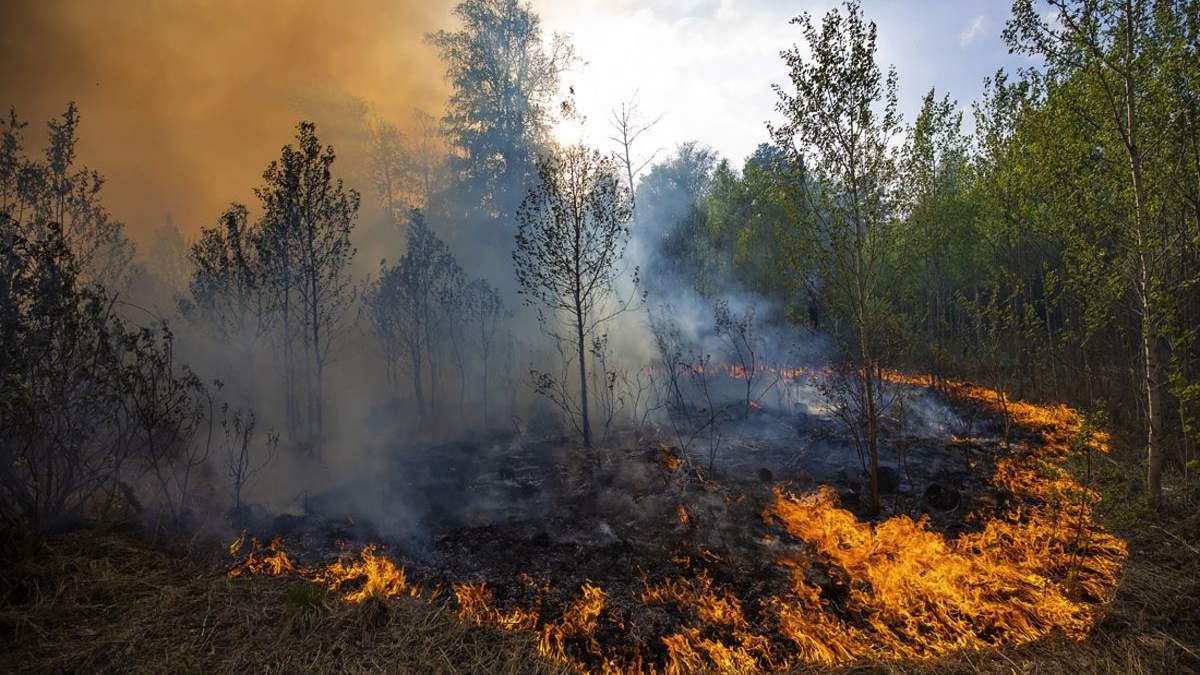 В России не утихают лесные пожары: есть пострадавшие – фото