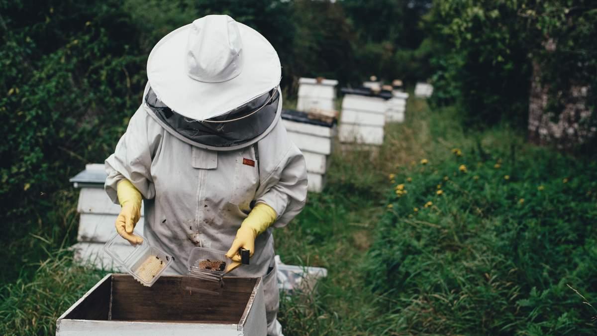 Бджолярі підрахували збитки після зими – причини та поради від еколога