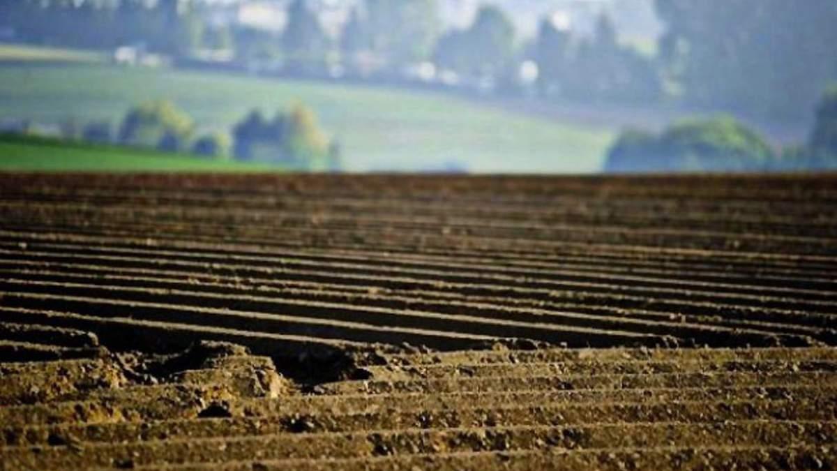 Фурса радить українцям не продавати земельні паї до 2024 року