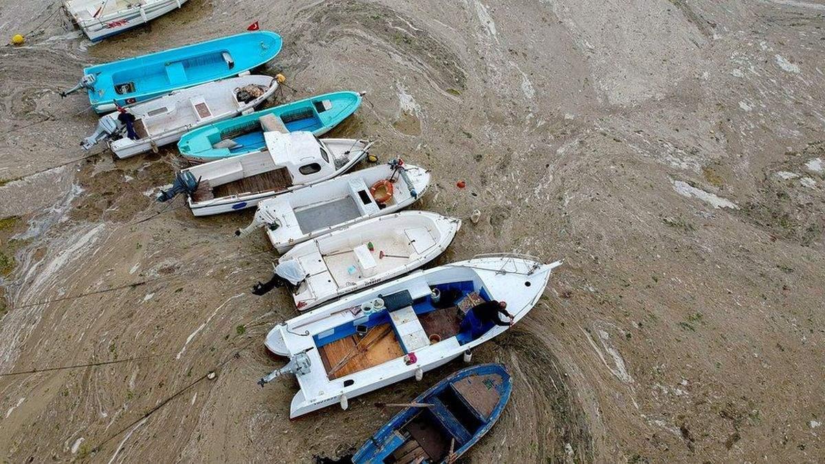 Мармурове море вкрилося морським слизом, що руйнує екосистему