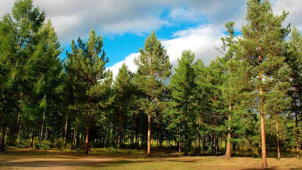 Зеленський підписав наказ про збереження і відновлення лісів