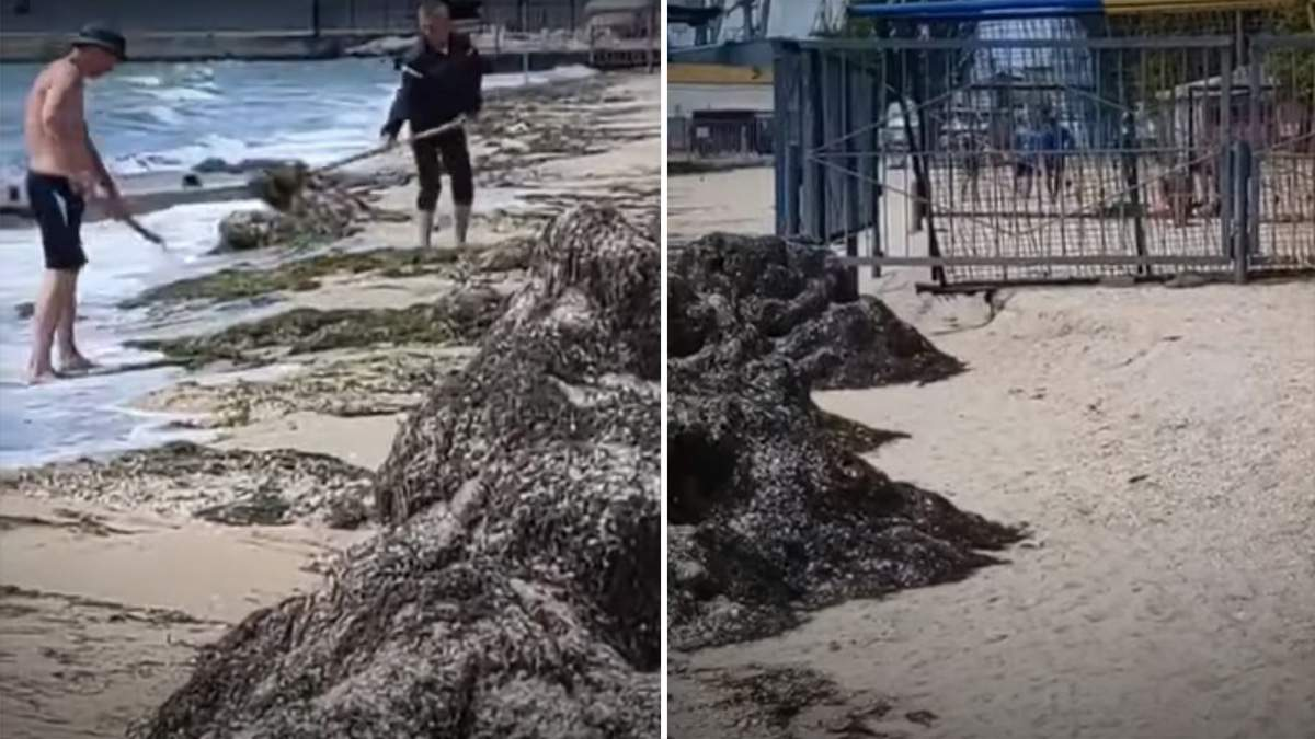 Комунальники Бердянська викидали водорості назад у море: відео
