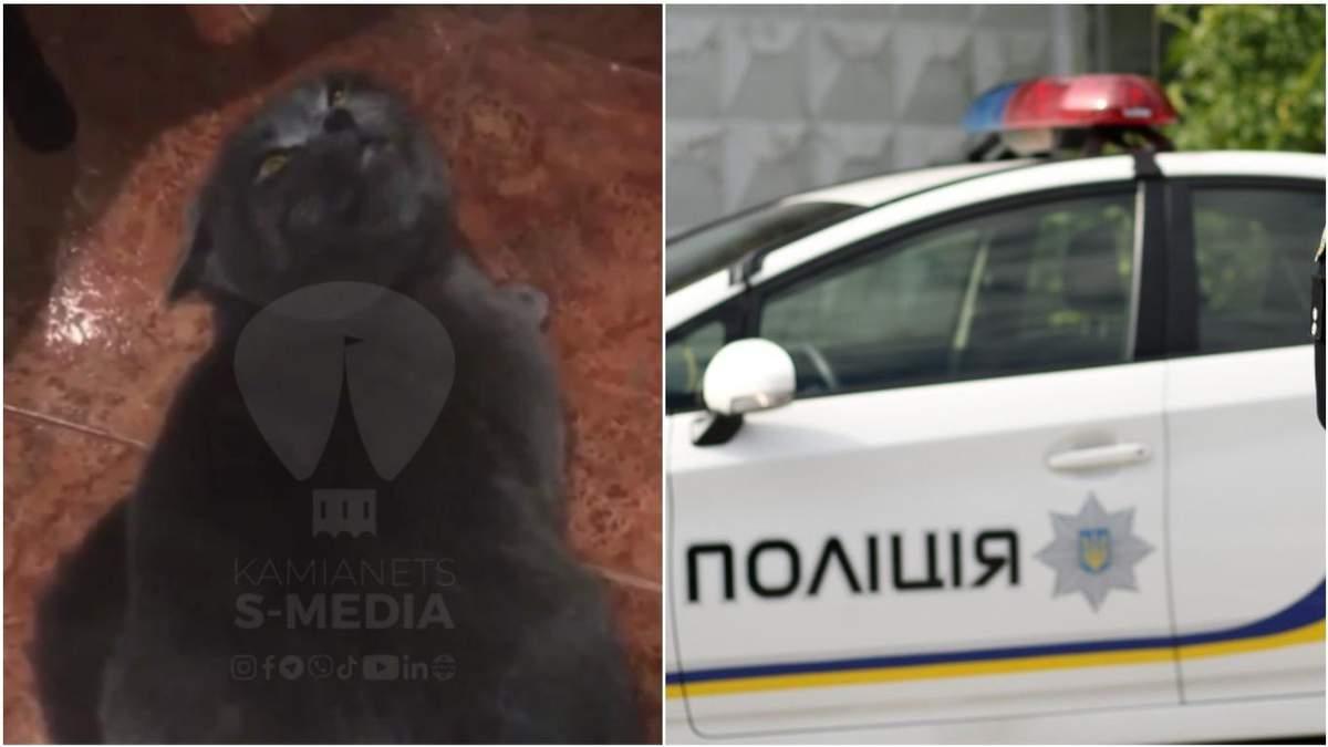 На Хмельниччині поліцейський побив кота, бо той не давав йому спати