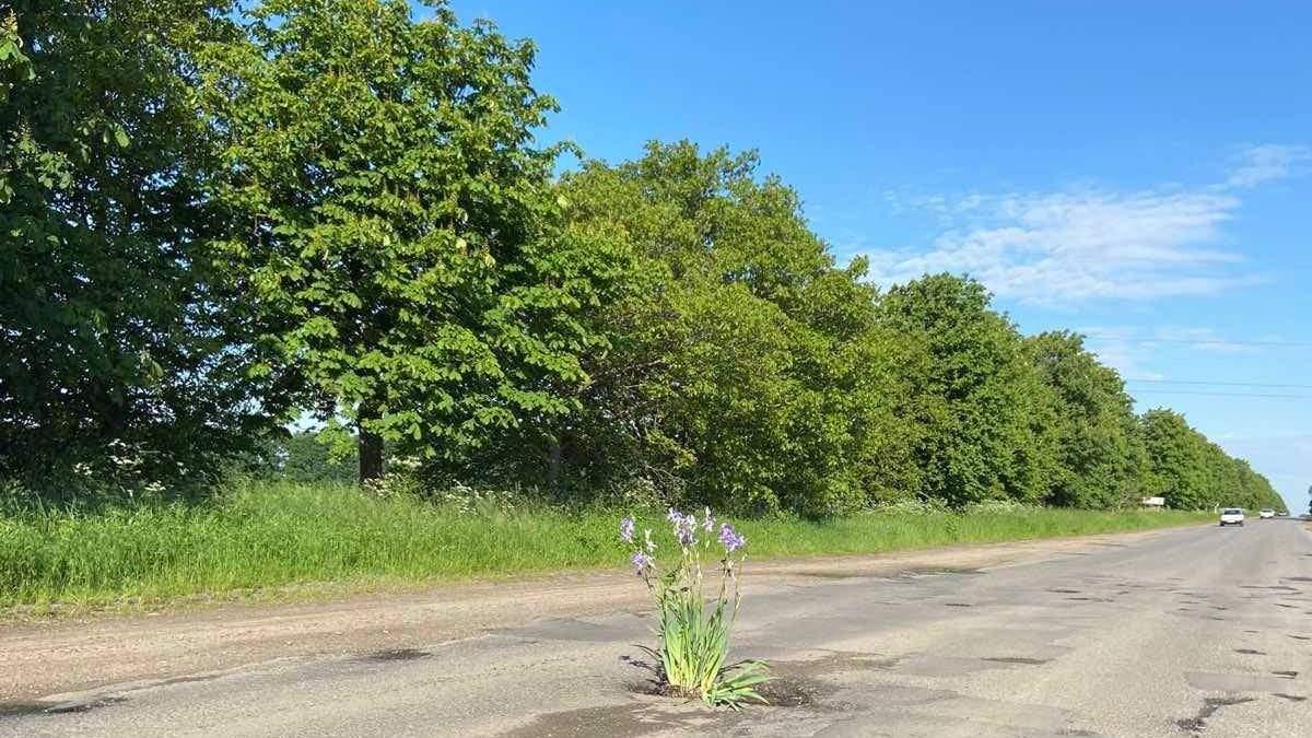 На Винниччине люди сажают цветы в выбоины на дорогах: фото