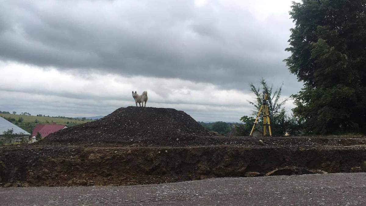 Самбірський Хатіко: покинутий пес місяць чекає свого горе-господаря – фото