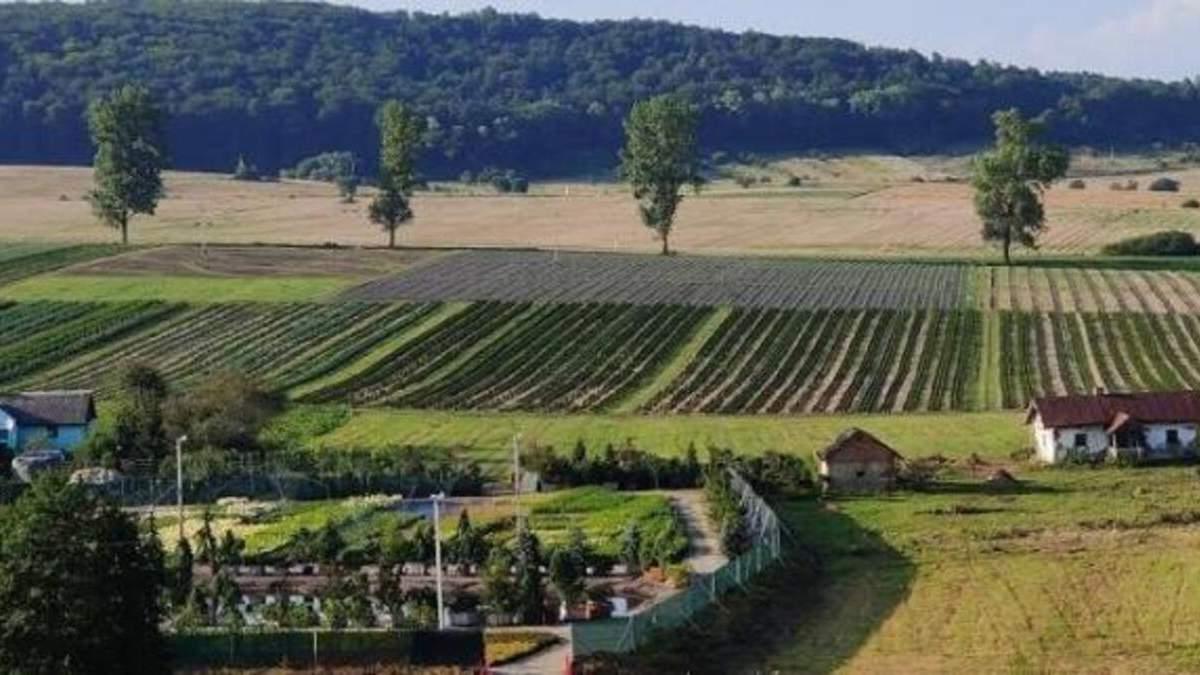 Сказочные лавандовые поля: у Львова появилась невероятная туристическая локация - фото