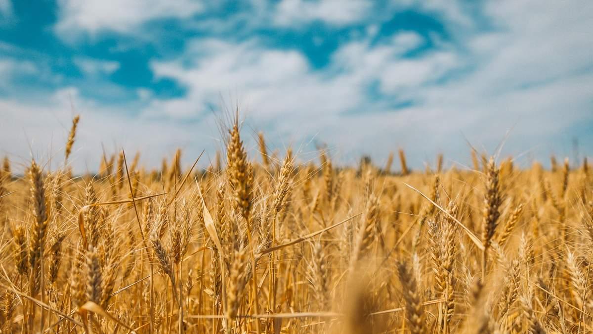 Україна переходить у зону надвисоких температур: що загрожує