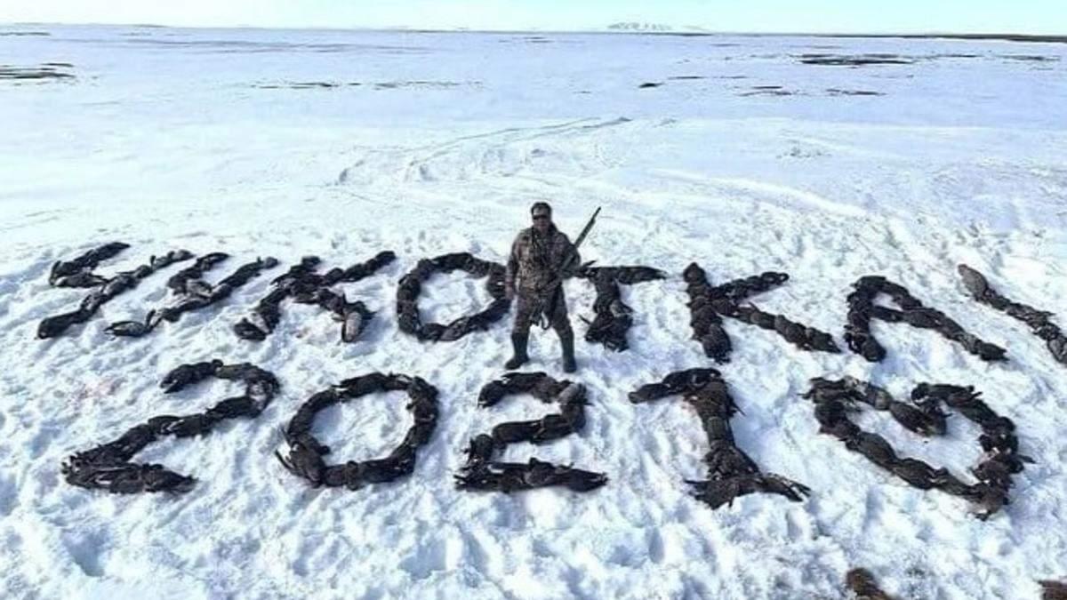 Депутат из партии Путина выложил на снегу надпись из 200 убитых птиц