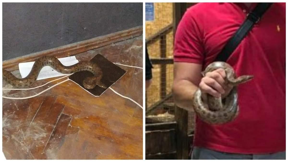 Попал в квартиру: в Харькове патрульные спасли редкого питона - фото
