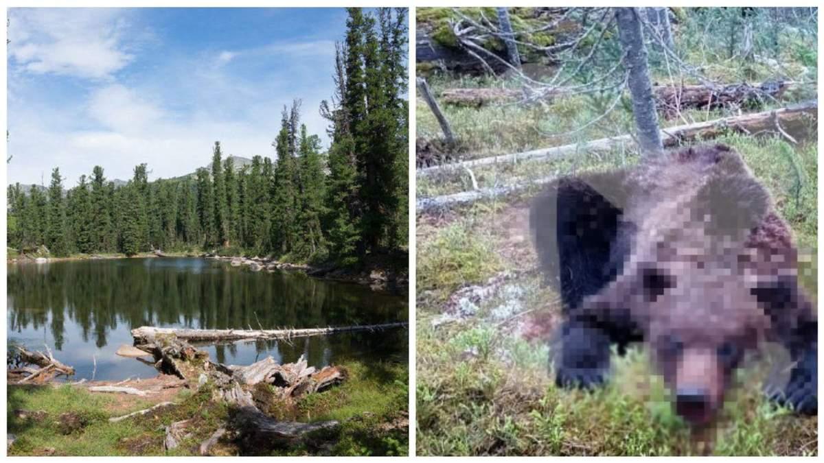 У Росії дикий ведмідь напав на туристичну групу: є загиблі