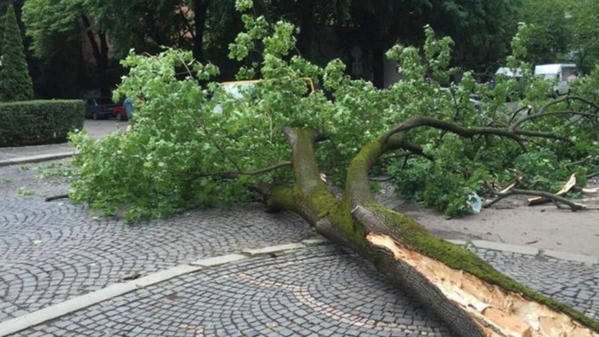 У Львові на 7-річного хлопчика впало дерево: він потрапив в реанімацію