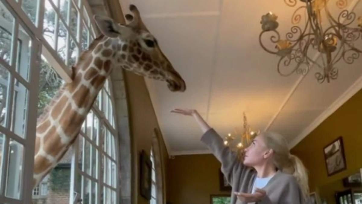 Пасинок Кернеса влаштував мамі сніданок із жирафами: відео