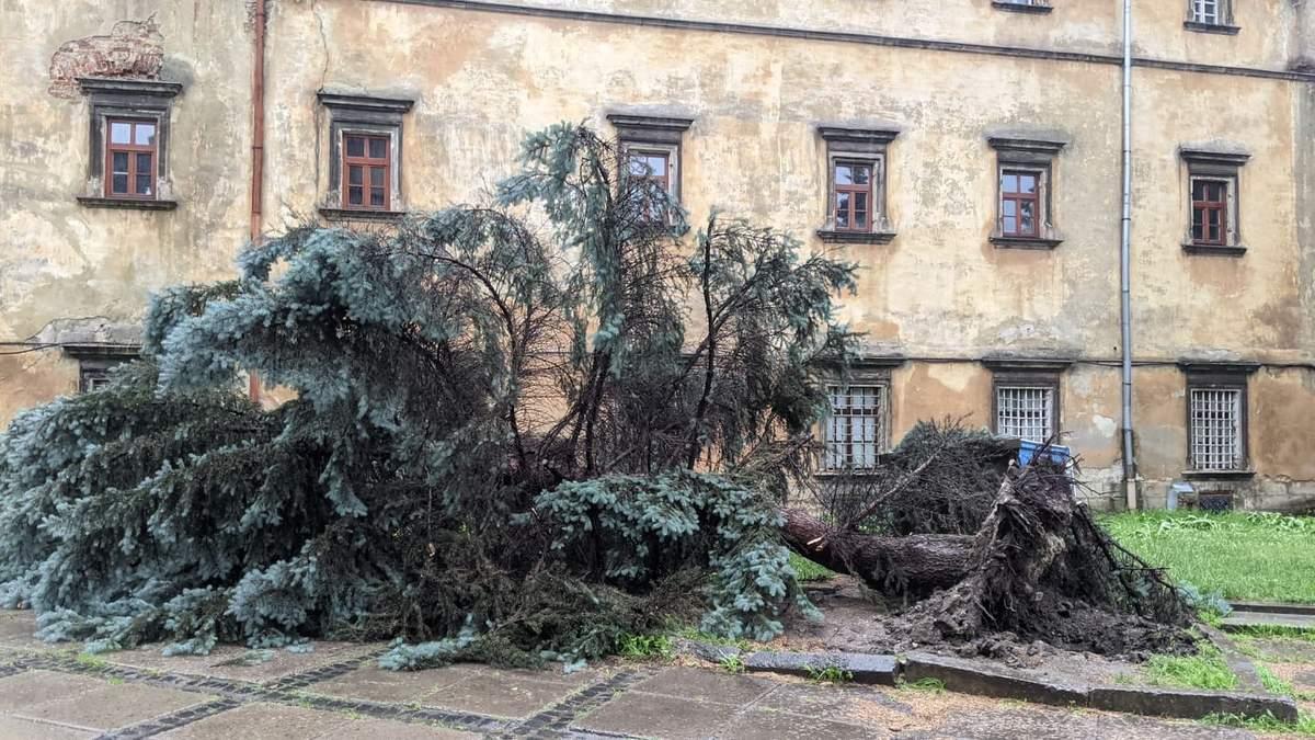 Злива у Львові 25 червня 2021: повалені дерева – фото, відео