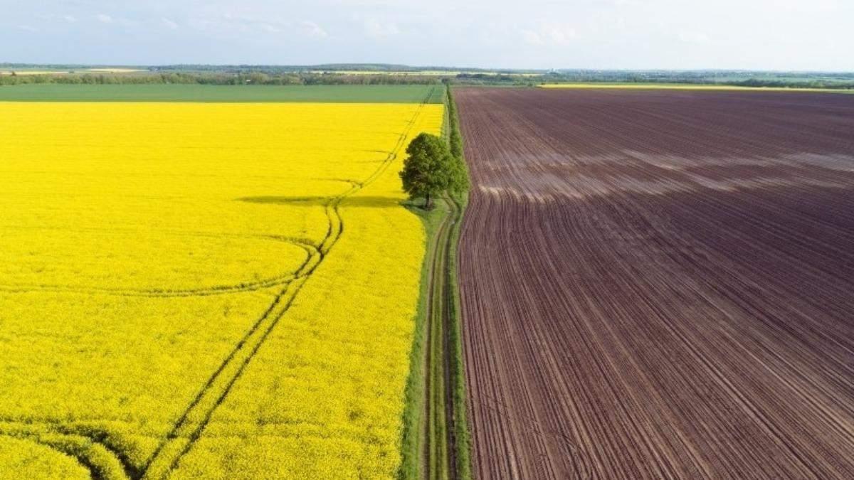 У росіян забиратимуть незаконно куплену українську землю, – Мінагро