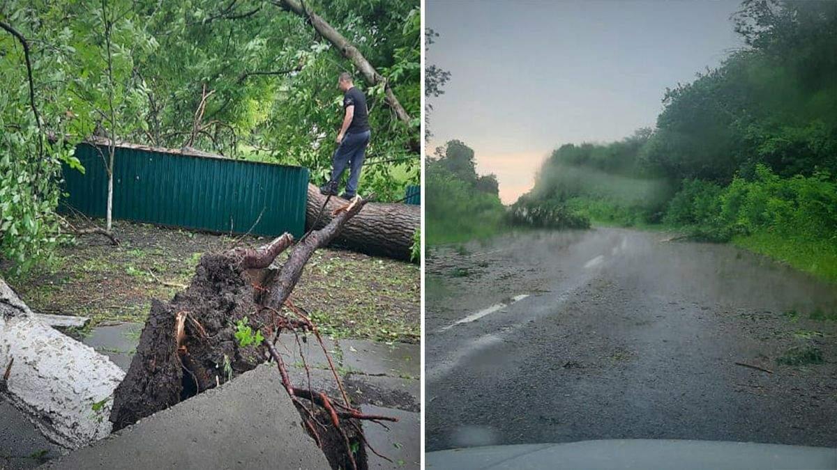 Негода на Буковині 30 червня: вирвані дерева, зірвані дахи  – фото