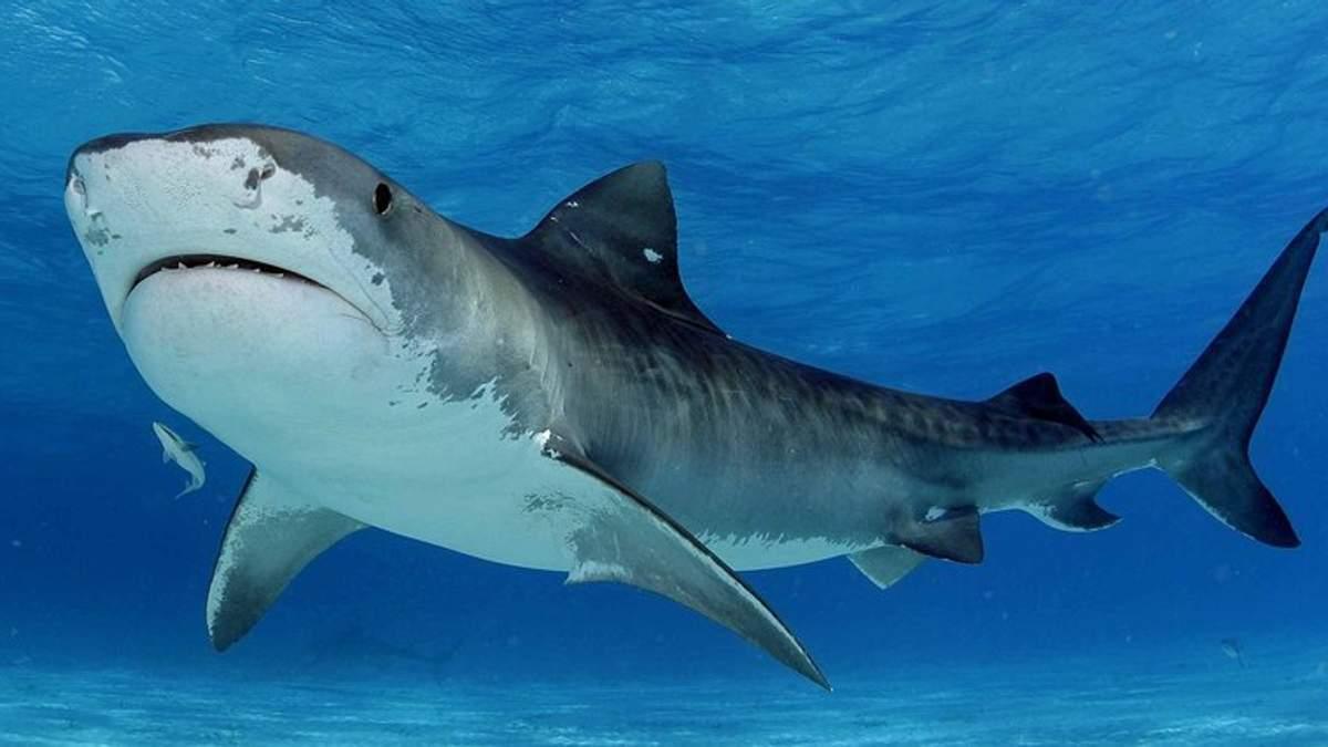 Акула выскочила из воды и откусила пятку отдыхающему