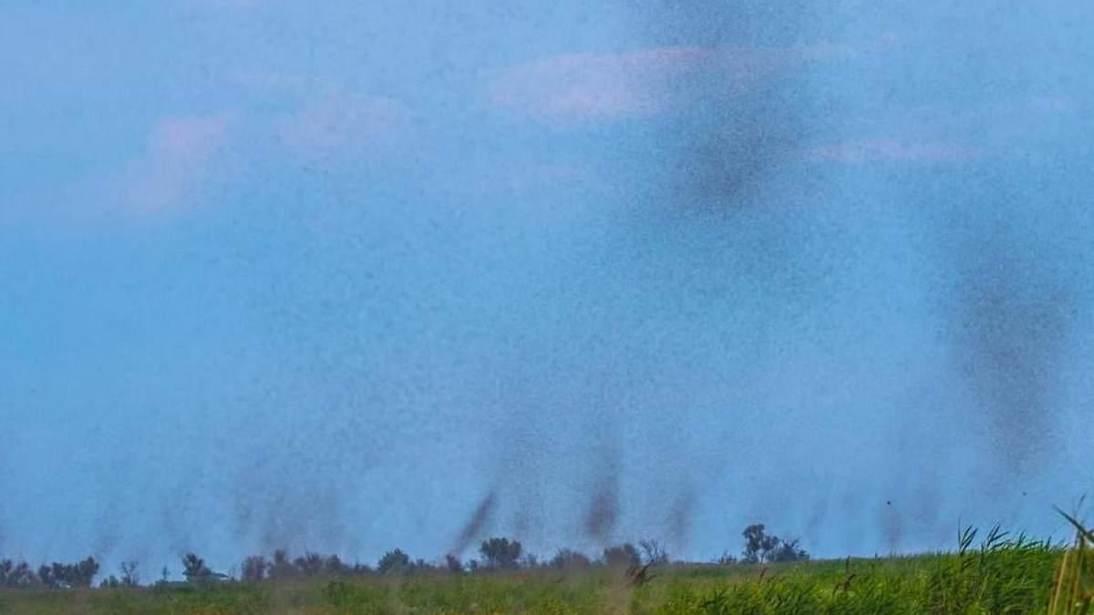 Рій комарів-дзвінців прилетів у нацпарк Тузлівські лимани: фото
